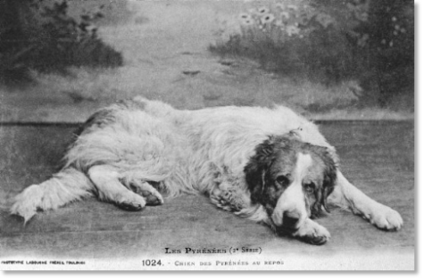 Old postcard of Pyrenees dog