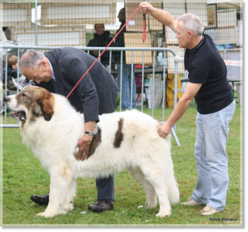 Pyrenean Mastiff Arbanies de Reis D'Aragon at the National d'Elevage du RACP in Francia