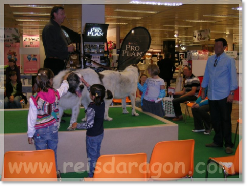 September 2010. Talk about the Pyrenean Mastiff in El Corte Inglés