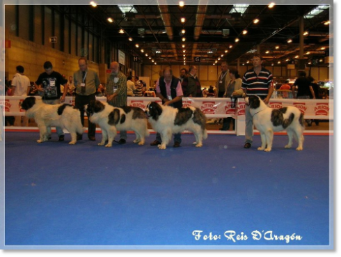 Dog Show of the Alianza Cinófila Latina RSCE. Madrid