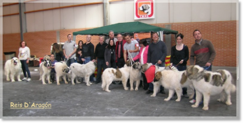 Pyrenean Mastiffs at the XXIV National Dog Show of Zaragoza 2012