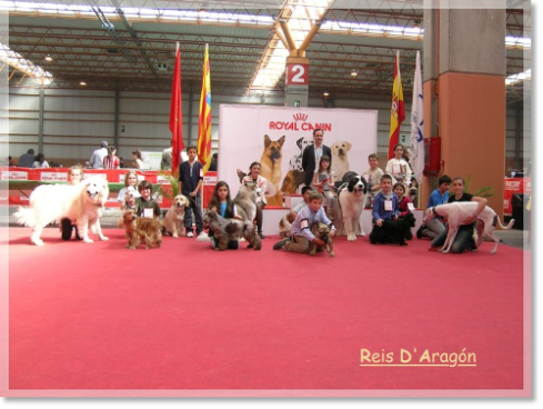 XXXII International Dog Show of Zaragoza 2012