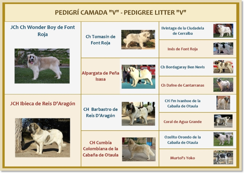 Pedigree of the puppies