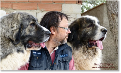 Santiago with Donna and Zacarías, Pyrenean Mastiffs in Reis D'Aragón